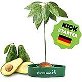 AvoSeedo - pflanze deinen eigenen Avocadobaum