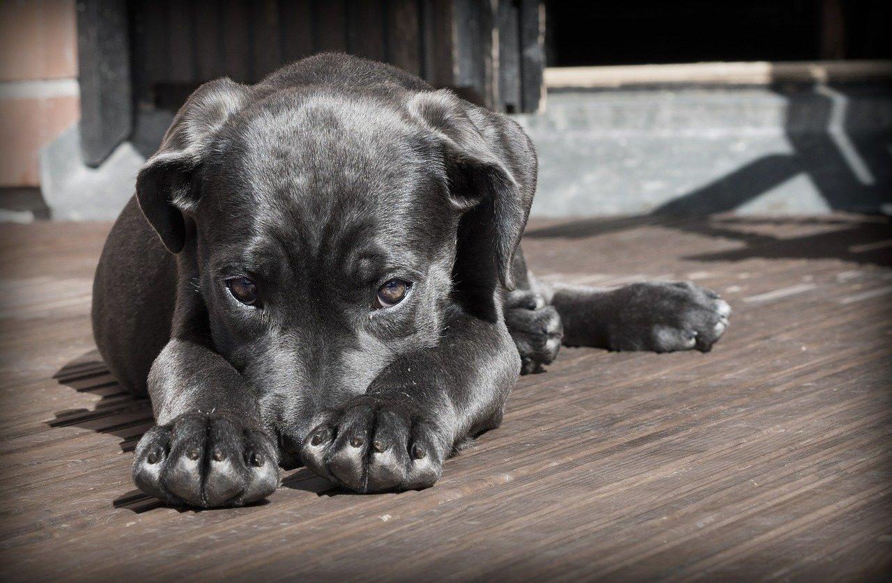 Hundemessen in Deutschland
